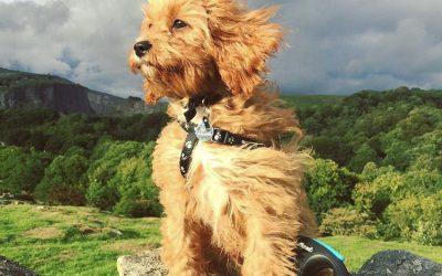 Manifesting a Puppy